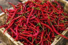 red chili powder businesss