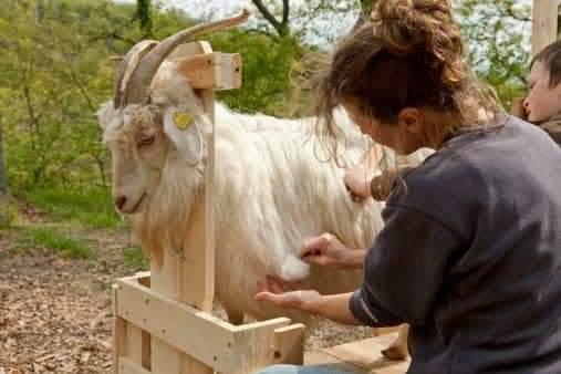 Wool of sheep